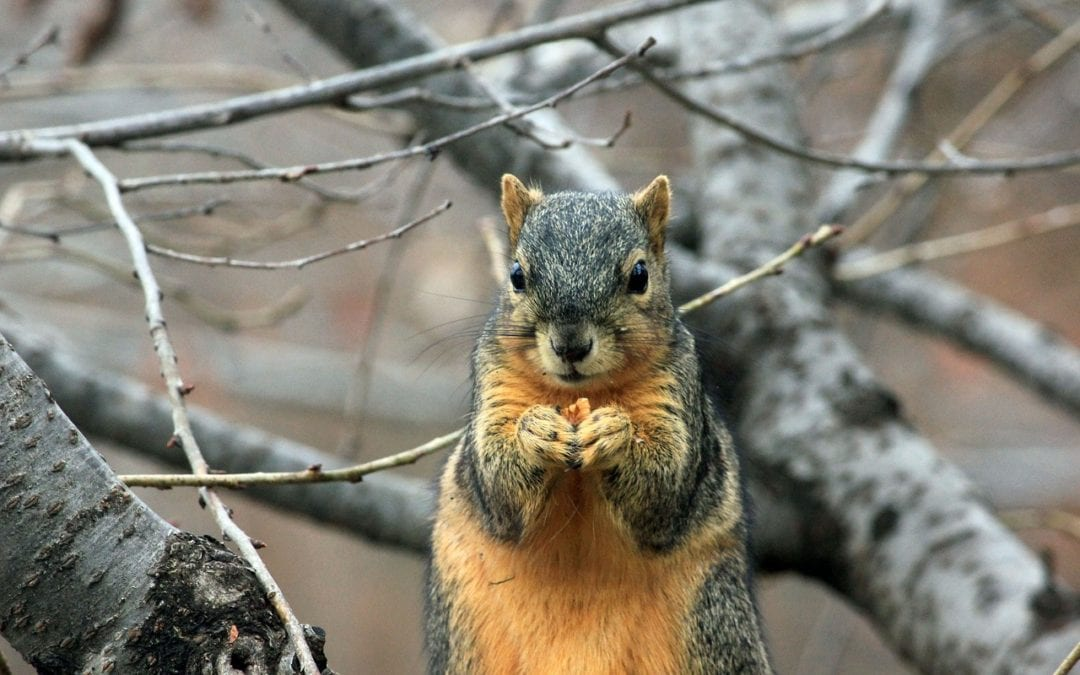 All Squirrels are Freelancers: Business Lessons from a City Park