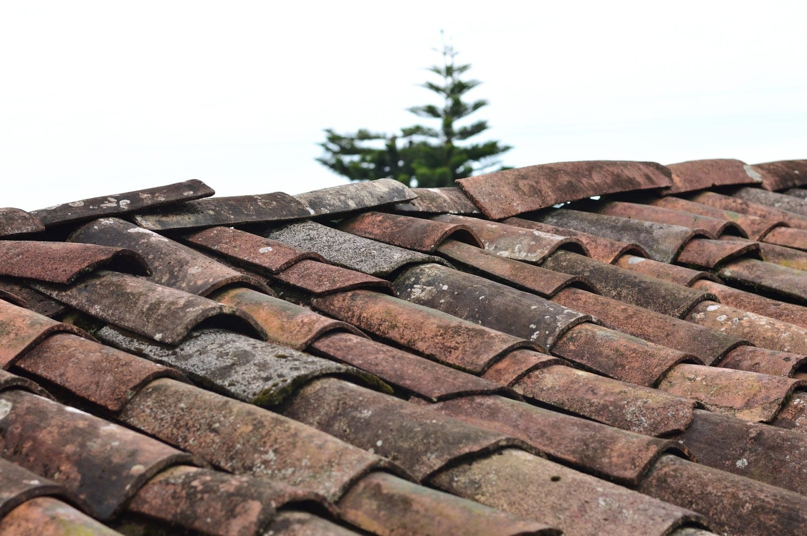 get a new roof