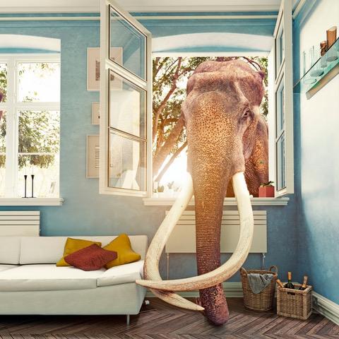 sexual frustration elephant
